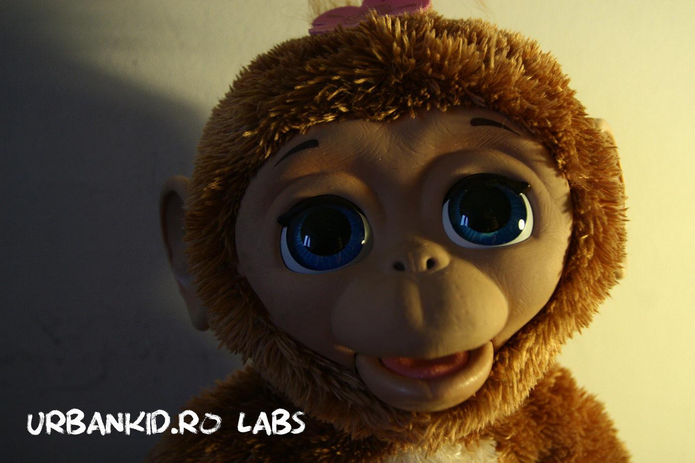 #pentrucă maimuță